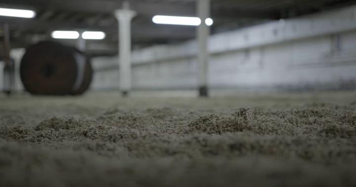 Barley awaiting malting at a Crisp facility in England. - Screencapture Via YouTube