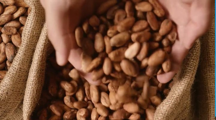 Cocoa beans are the basic ingredient in chocolate. - Screencapture Via YouTube