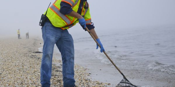 A member of a contracted oil spill response organization cleans oily debris from Slaughter Beach...