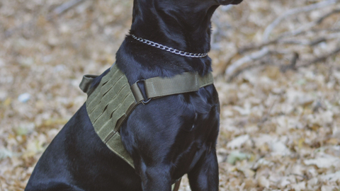 Every product in the North American K9/Voodoo Tactical line is designed for ultimate K-9 comfort...
