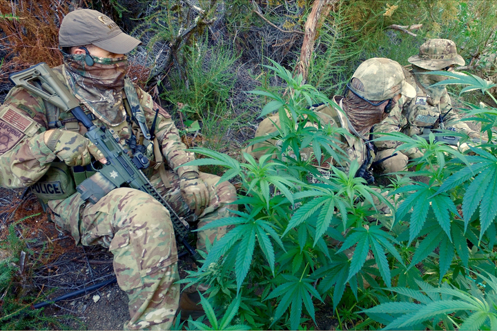 Lieutenant John Nores (left) sits with fellow operators with the California Department of Fish and Wildlife's Marijuana Enforcement Team (MET) among some pot plants grown illegally on public lands by members of the Mexican drug cartels.  - Image courtesy of John Nores.