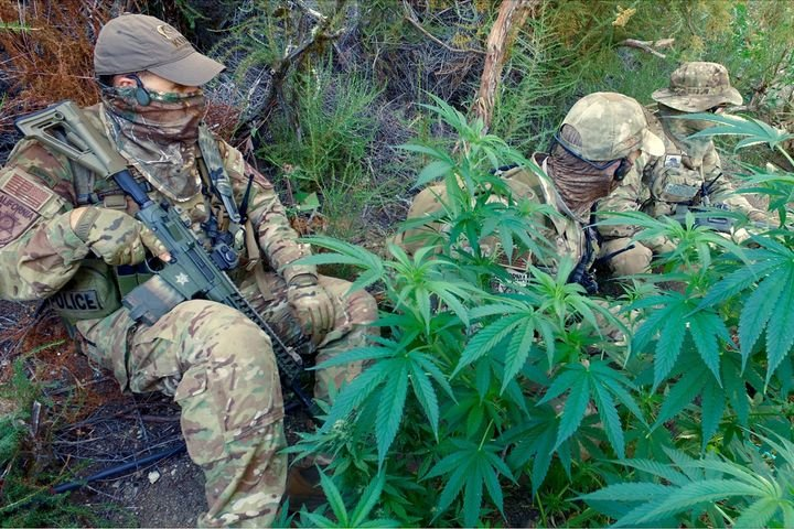 Lieutenant John Nores (left) sits with fellow operators with the California Department of Fish and Wildlife's Marijuana Enforcement Team (MET) among some pot plants grown illegally on public lands by members of the Mexican drug cartels. 