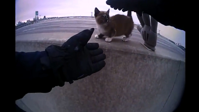 An officer with the North Kansas City (MO) Police Department coming to the rescue of a tiny kitten trapped on the Jersey barrier between the northbound and southbound lanes of an area highway.