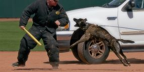 K-9 Units Compete in Desert Dog Trials