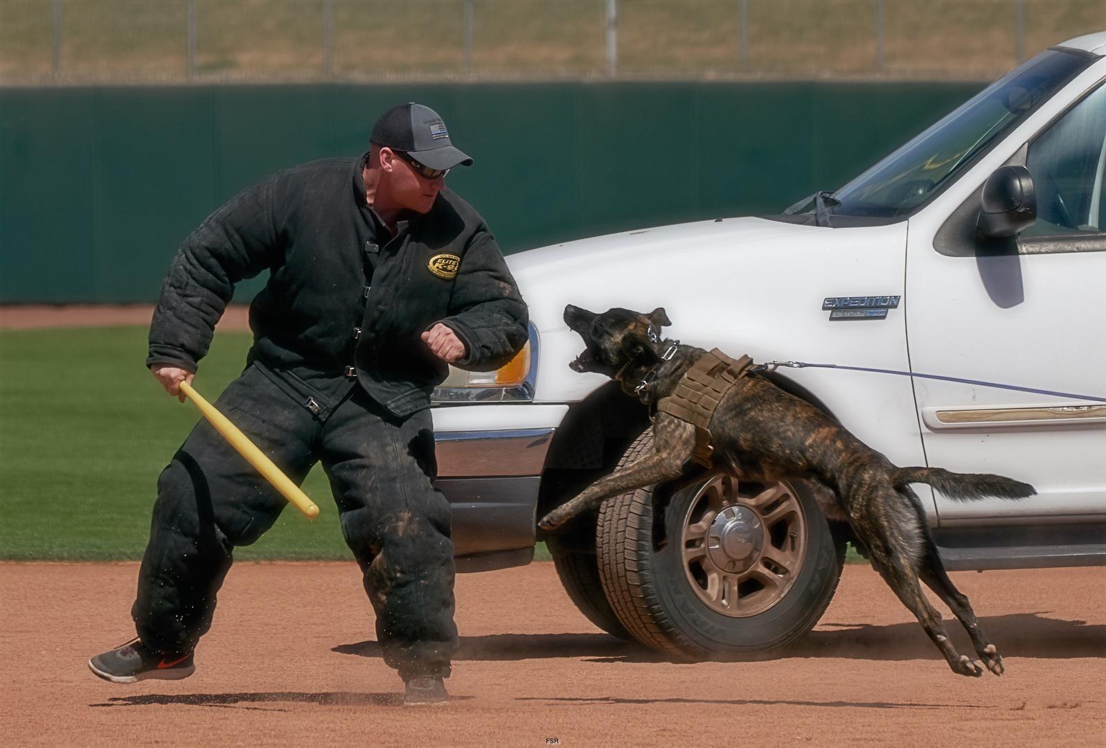 K-9 Units Compete in Desert Dog Trials