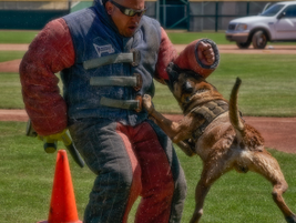 The 2019 Desert Dog Trials were held last weekend in Scottsdale, AZ. The event is sponsored by...