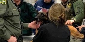 California K-9 Wounded, Suspect Dead in Gunfight