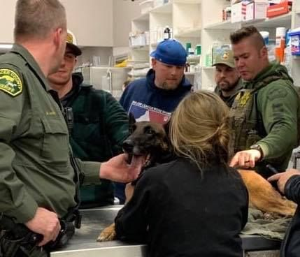 K-9 Eros was then transported to a veterinary facility, where he underwent surgery, which was considered to be successful.
