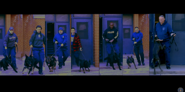Video: Baltimore PD's Newest K-9s in Training