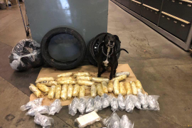 California K-9 Sniffs Out Massive Stash of Narcotics