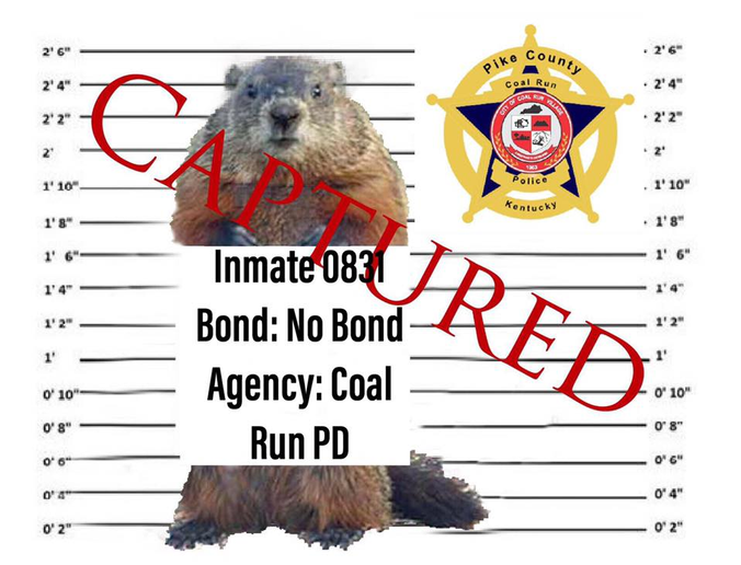 "Andrew Scott—the Mayor of Coal Run (KY)—said on Facebook, ""This morning, in consultation with the City Attorney and Chief of Police, I ordered the immediate arrest of Punxsutawney Phil for violation of Kentucky Revised Statutes, Chapters 194A and 523. Specifically, the warrant alleges Fraud and Unsworn Falsification.