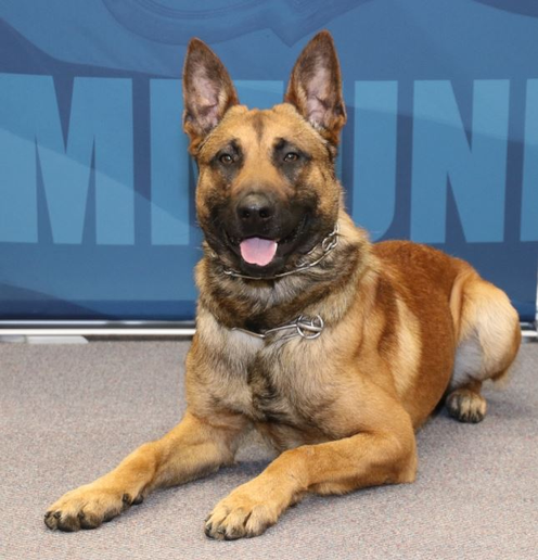 A K-9 with the Green Bay Police Department was stabbed multiple times on Saturday night during a call about a man with a gun.  - Image courtesy of Green Bay PD / Facebook.