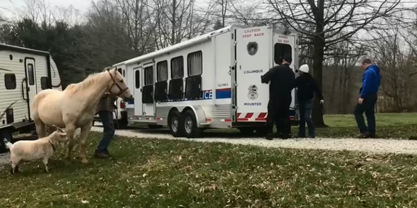Video: West Virginia Teen Donates Horse to Ohio Police Department's Mounted Unit