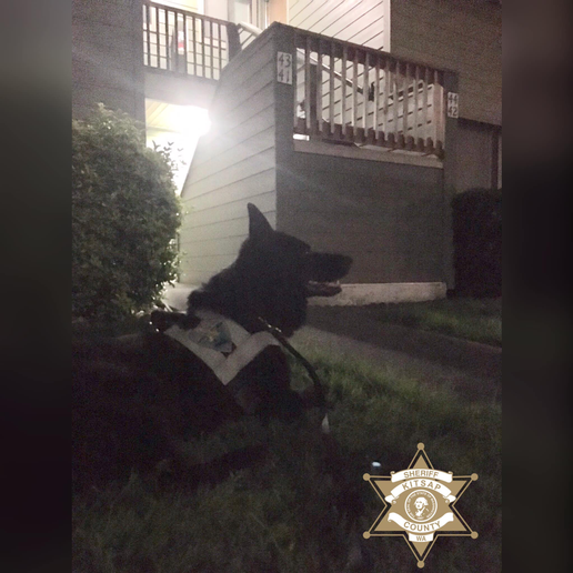 "The Kitsap County Sheriff's Office said on Facebook, ""K-9 Heiko loves to play 'Hide-n-Seek!' Early this morning at 2:00 am, a 33-year-old joined in with K-9 Heiko, when he ran from officers in East Bremerton. This subject had arrest warrants for 2nd Degree DV Assault, Burglary (DV) & was also wanted for Violation of a No Contact Order.""