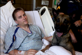 Video: Wounded Alabama Officer Reunited with K-9 Partner in Hospital