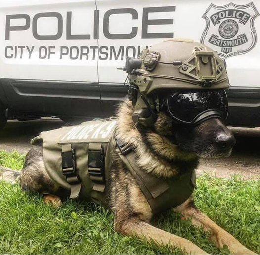 K-9 Max reportedly suffered severe internal injuries following a fall. He was transported to a nearby veterinary hospital where his conditioned worsened. He was subsequently humanely euthanized.  - Image courtesy of thePortsmouth (NH) Police Department / Facebook.