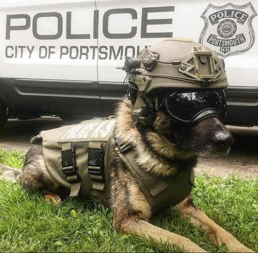 K-9 Max reportedly suffered severe internal injuries following a fall. He was transported to a nearby veterinary hospital where his conditioned worsened. He was subsequently humanely euthanized.