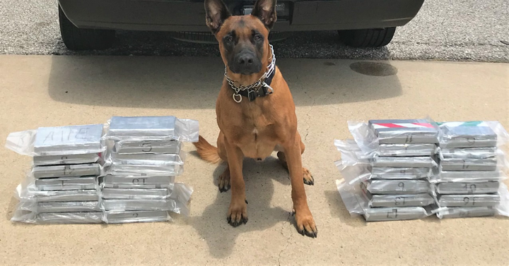 """K-9 """"Spyke"""" with the Fort Bend County Narcotics Task Force—a multi-agency initiative of the Houston HIDTA—is being credited with sniffing out a $1.4 million cocaine shipment secreted in a custom compartment in a vehicle on a local highway last week.  - Image courtesy of Fort Bend PD / Facebook."""