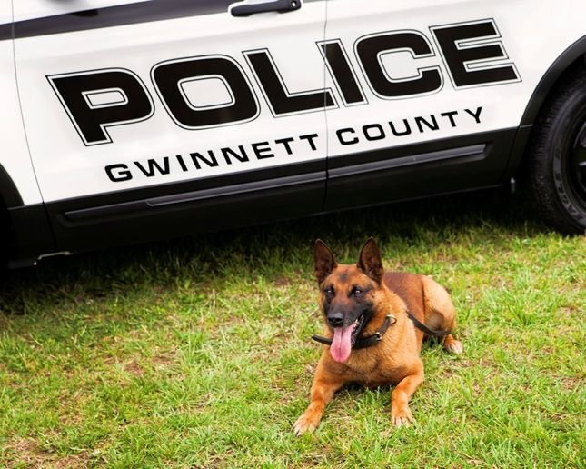 K-9 Eli of the Gwinnett County Police Department died after he fell ill while tracking a suspect.  - Photo: Gwinnett County Police
