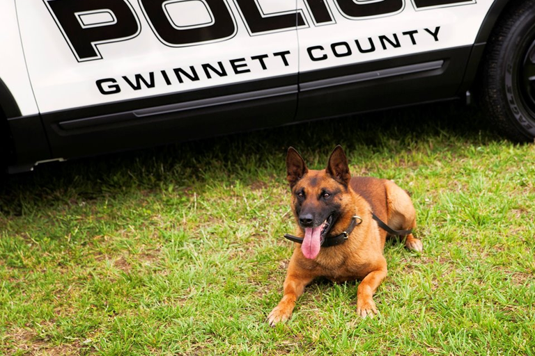 K-9 Eli of the Gwinnett County Police Department died after he fell ill while tracking a suspect.