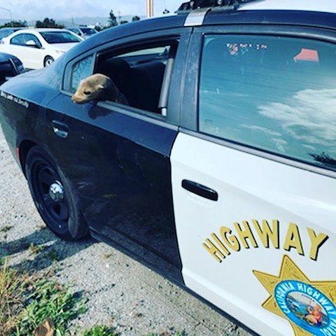 Officers with the California Highway Patrol were alerted to a traffic backup on a busy freeway south of San Francisco on Tuesday.