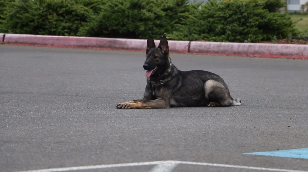 Video: Washington Department Welcomes New K-9