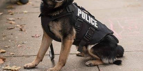 Michigan K-9 Dies from Recently Diagnosed Medical Condition