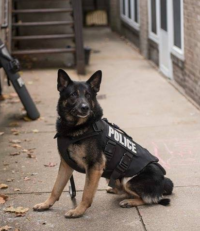 K-9 Rushin passed away from a recently diangnosed illness. 