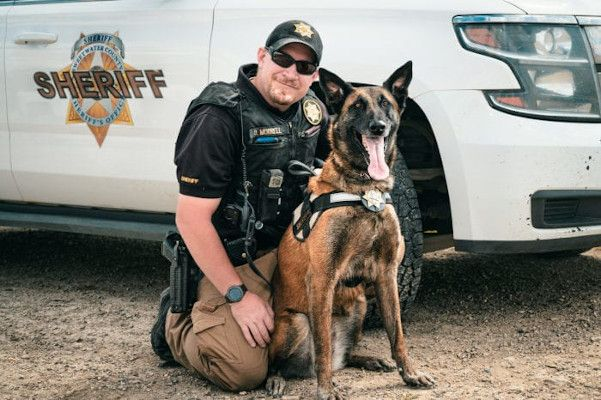 Deputy Derek Morrell and K-9 Jara (pronounced Yara) found a missing boy.