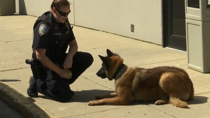 Officers with the Minot Police Department this week welcomedK-9 Caspian to the ranks.  - Image courtesy of KX News (screen grab of video segment).