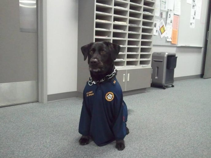 K-9 Marcel.