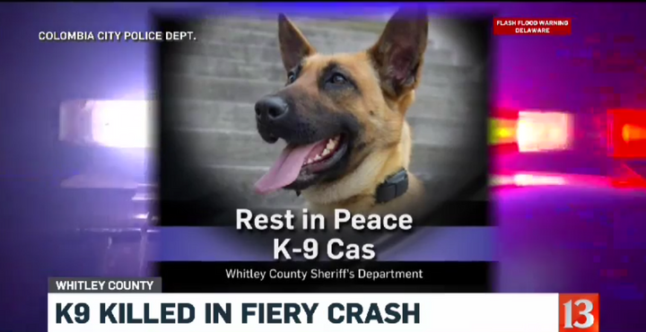 Whitley County (IN) Sheriff's Office K-9 Cas was killed in a pursuit crash Wednesday. (Photo: WTHR Screen Shot)