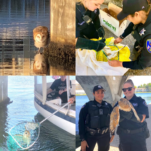 Two officers with the Foster City Police Department took quick action to rescue an injured barn own from beneath a Bay Area bridge on Monday.  - Image courtesy of Foster City PD / Facebook.