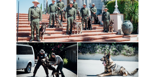 California State Parks is commemorating the 50th anniversary of its K-9 program. At an event...