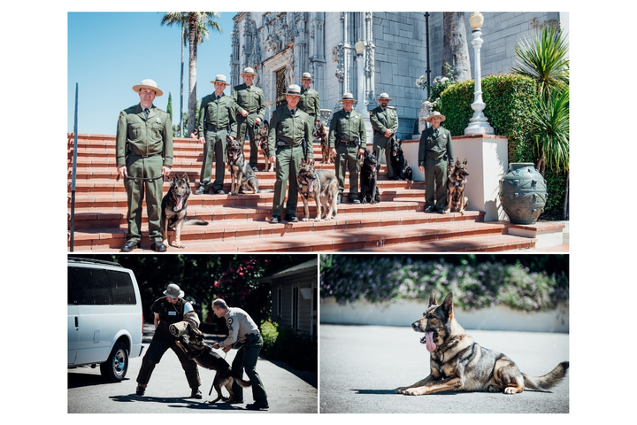 California State Parks is commemorating the 50th anniversary of its K-9 program. At an event held at Hearst San Simeon State Historical Monument late last week, eight K-9 teams from across the state showcased live demonstrations that included obedience, detection, and protection skills.
