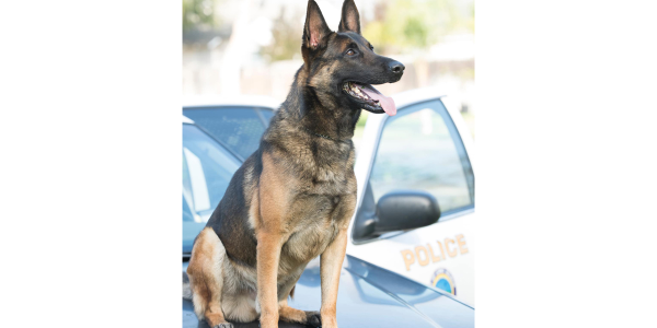 K-9 Ozzie's handler was off duty when he found the dog in deceased in a department issued patrol...