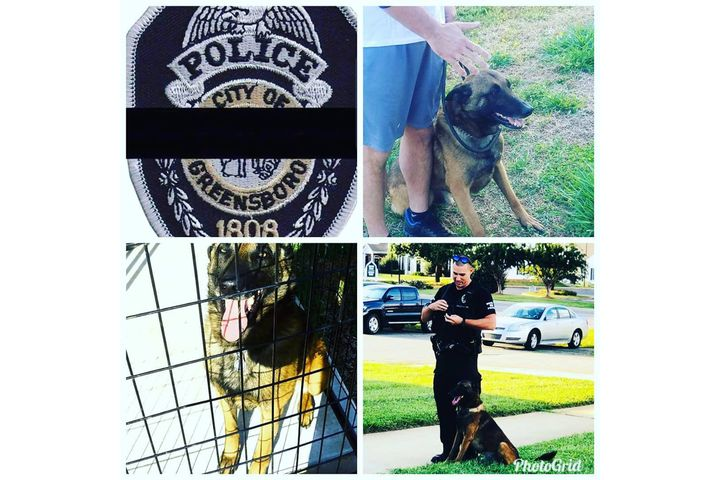 K-9 Rambo wasstruck and killed by a car while chasing a suspect.  - Image courtesy of Greensboro PD / Twitter.