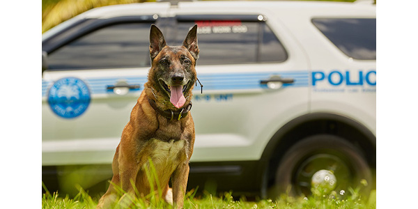 K-9 Boss is back on duty for the City of Miami Police Department after surviving cancer.