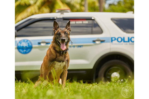 K-9 Boss is back on duty for the City of Miami Police Department after surviving cancer.  - Photo: City of Miami (FL) Police Department