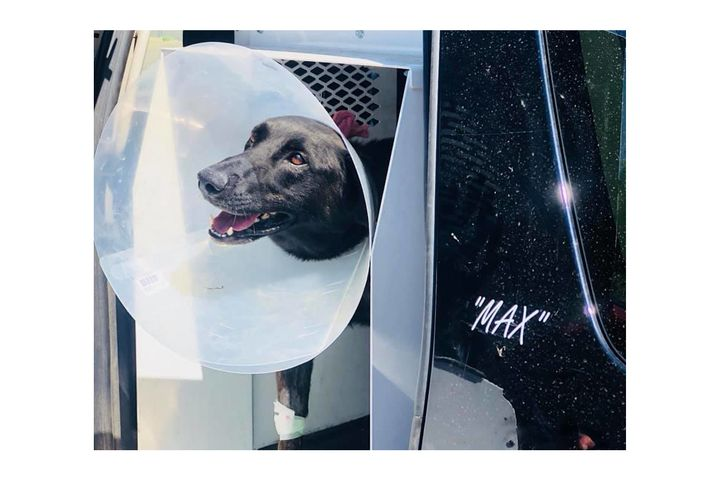 K-9 Max was shot on duty and is now recovering.