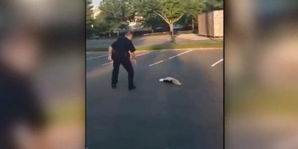 Massachusetts Officer Rescues Skunk—Gets Sprayed in the Process