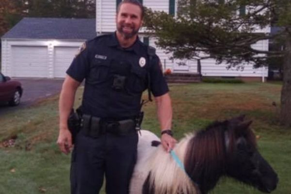 An officer with the North Haven (CT) Police Department managed to take into custody a small horse that was roaming the streets of the city not far from Long Island Sound and return the animal to its owner. - Image courtesty of North Haven PD / Facebook.
