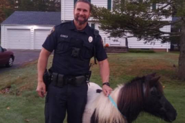 Connecticut Officer Corrals Loose Horse Roaming the Streets