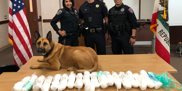 K-9 Ajax of the San Mateo (CA) Police Department is being credited for the seizure of 23 pounds...