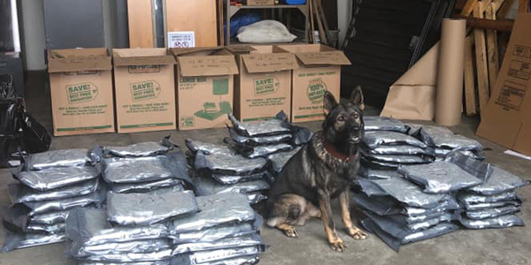 K-9 Rambo sniffed out 94 pounds of marijuana.