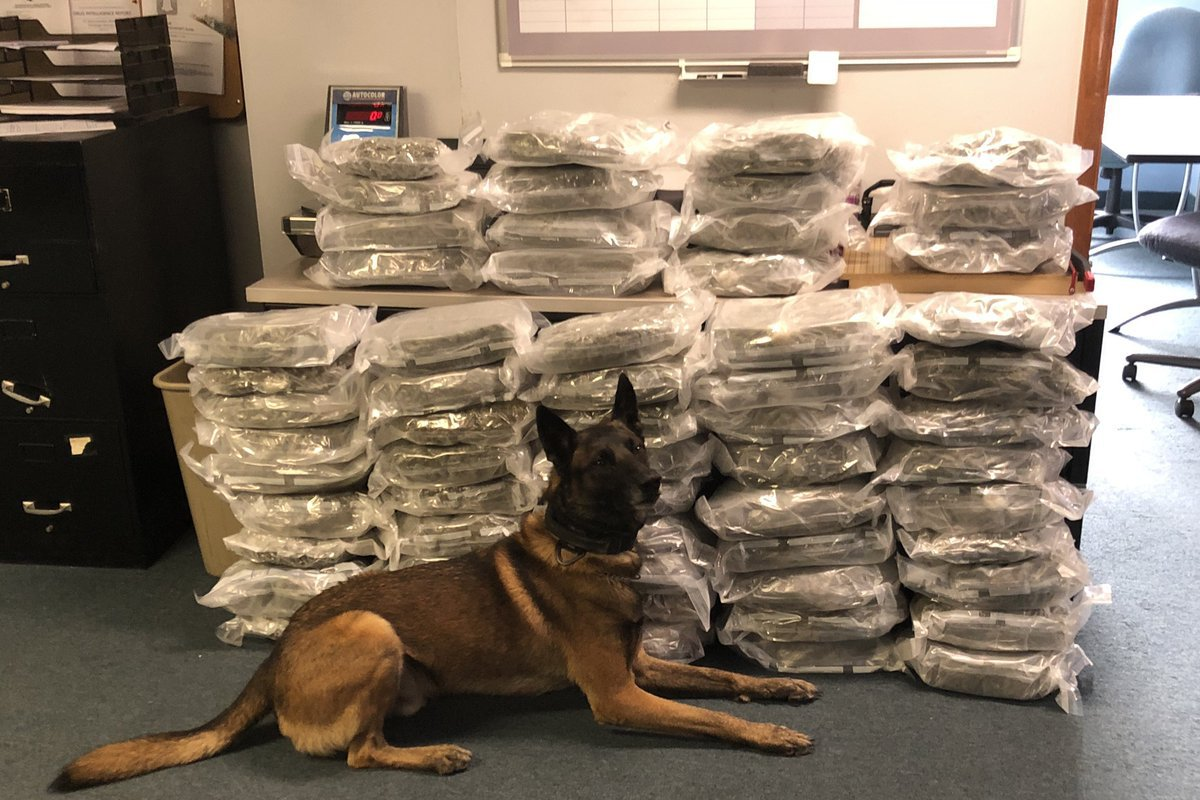K-9 Thor is being credited with the location and seizure of 60 pounds of marijuana at a traffic stop on Monday, and the subsequent seizure of large amounts of cocaine, MDMA, crystal meth, and fentanyl.