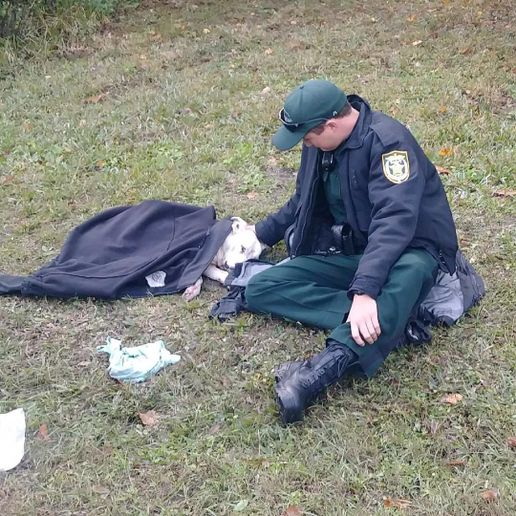 Deputy Josh Fiorelli with the Osceola County Sheriff's Office has been praised on social media for an image that was posted there showing him comforting a dog that had been hit by a car, waiting with the dog for animal control to arrive.