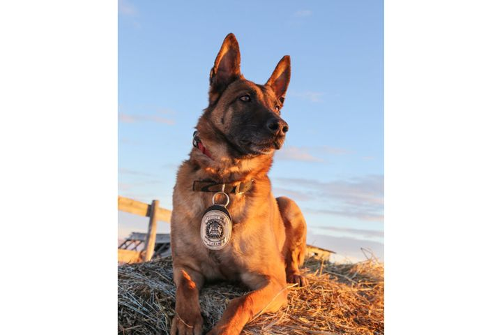 The Calgary Police Service is mourning the death of retired K-9 Sarka after the dog passed away on Monday evening. - Image courtesy of Calgary Police Service / Facebook.
