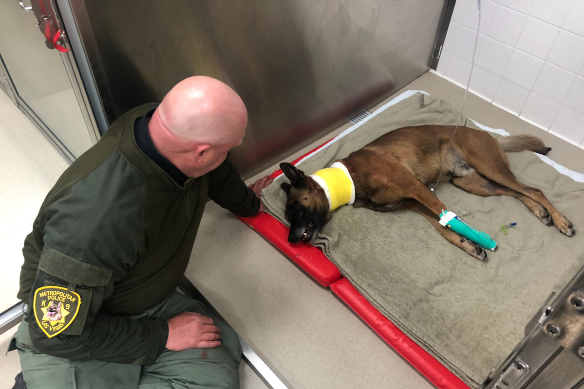 Las Vegas K-9 Stabbed During Standoff, Expected to Recover
