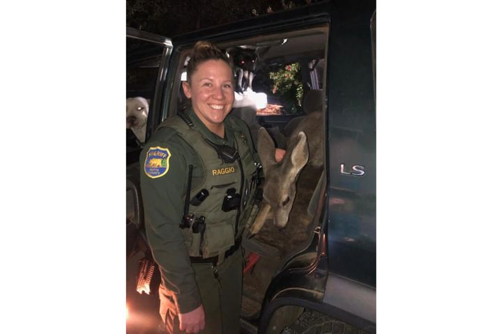 The Butte County Sheriff's Office posted on social media an image of one of the agency's deputies with a wild deer in the back of a vehicle at a traffic stop. - Image courtesy ofButte County Sheriff's Office / Facebook.